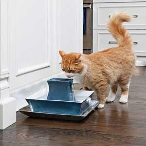 Drinkfontijn van Pet Safe voor katten die water moeten drinken.