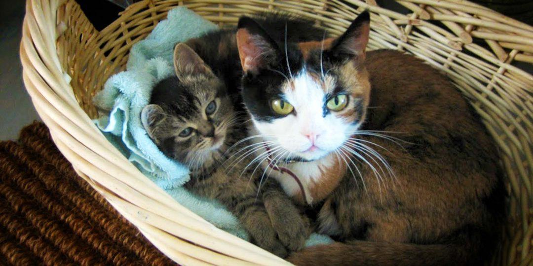Een reismand voor je kat moet wel van goede kwaliteit zijn.