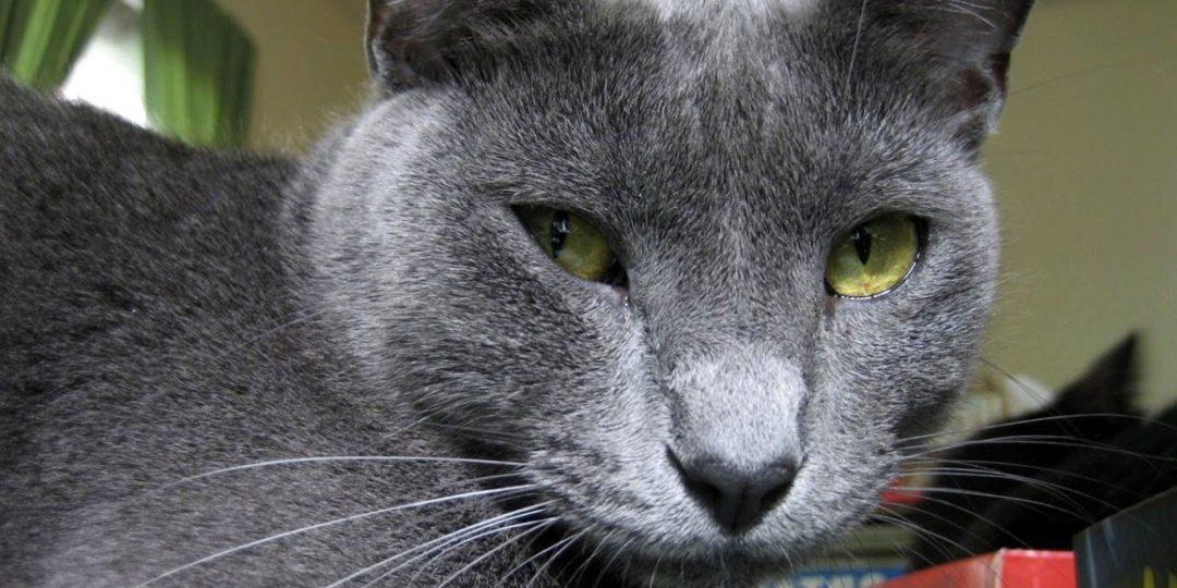 Krabpaal voor je kat uitzoeken.