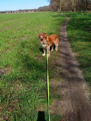 Maak je rollijn vast aan een hondentuigje.